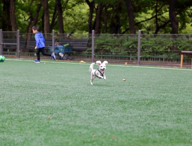 A dog running on Surface America's Doggy Turf