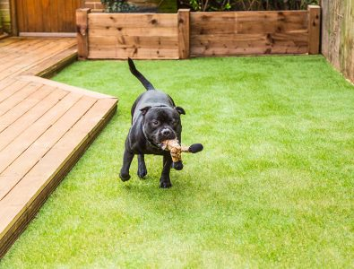 A dog running with a chew toy on Surface America's Doggy Turf